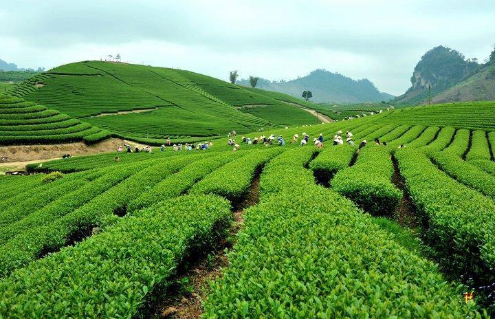 Lush green agric