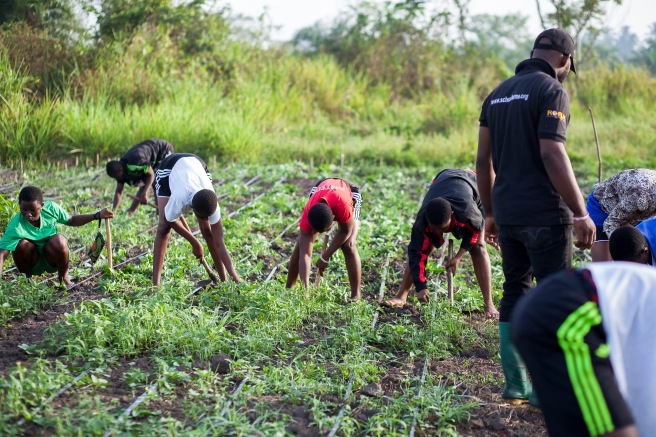 Rural young students working on their school farm at Sokode Senior High Technical School in the Volta region of Ghana, West Africa